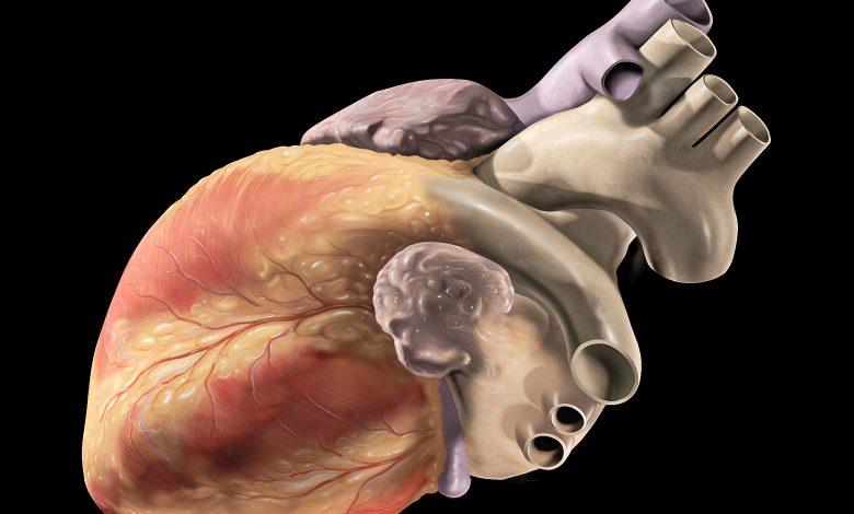 Maddi kalp ile manevi kalp arasında nasıl bir bağ var?   Ali Demirel 1