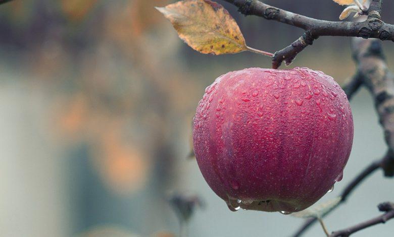Elmayı ısırmadan önce   Zekeriya Çiçek 1