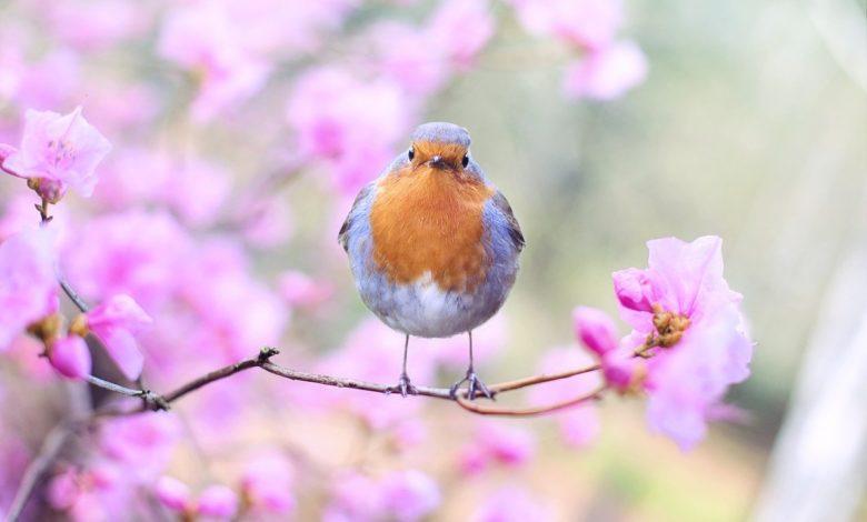 Mantıka't-Tayr Kuş Dili ve... | Abdullah Aymaz 1