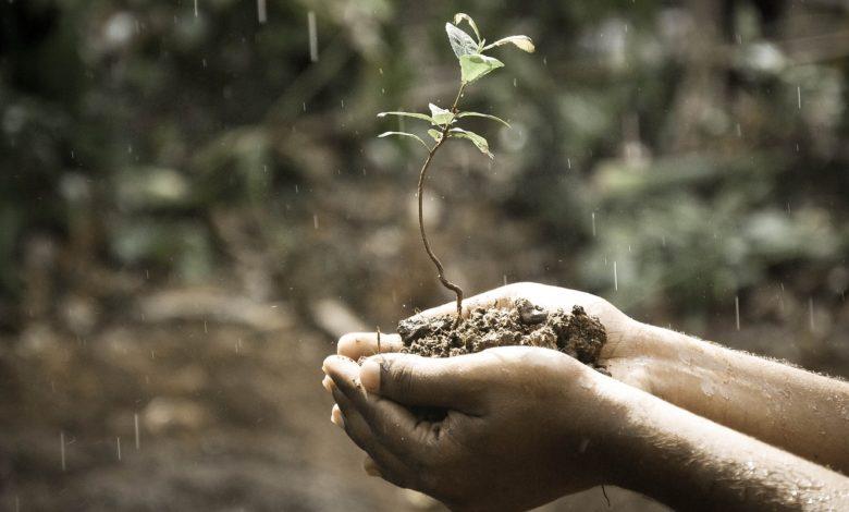 Toprak ve tefekkür   Zekeriya Çiçek 1