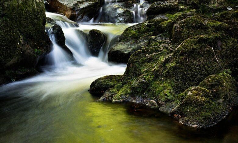 Geleneğin Akisleri | Safvet Senih 1