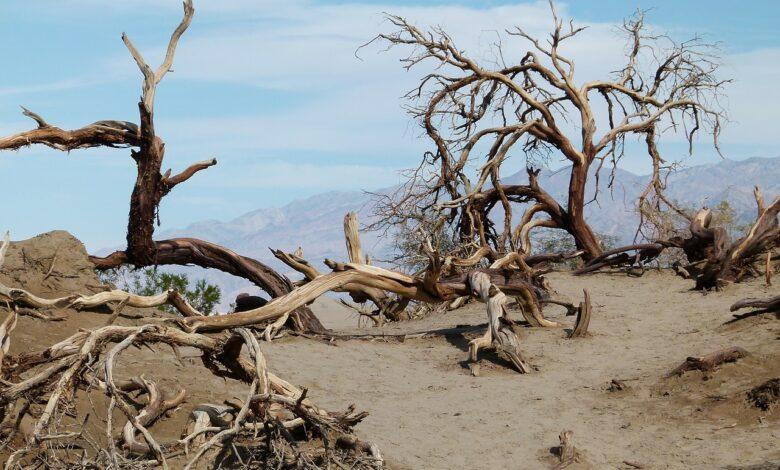 Çekil aradan be kuru ağaç sapı | Zekeriya Çiçek 1