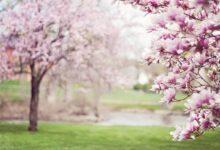 Photo of Baharı Zorlayanlar | Safvet Senih