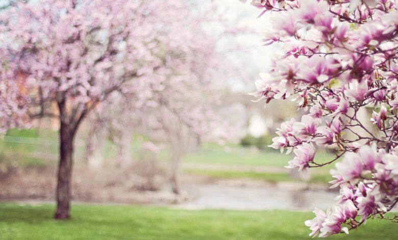 Baharı Zorlayanlar  | Safvet Senih 1