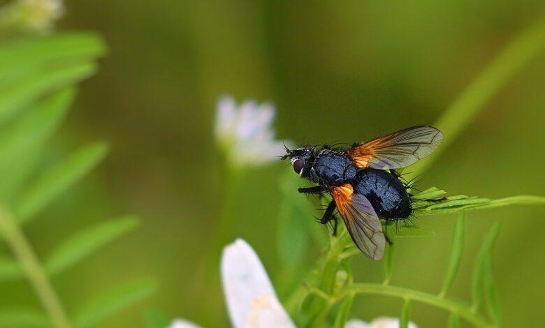 Siz hiç mikroskop ile sinek kanadını incelediniz mi?   Zekeriya Çiçek 1