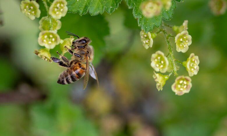 Arı bal yaparmış DNA ise naz | Zekeriya Çiçek 1