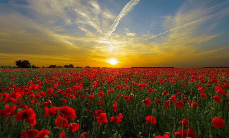 Güneş içimizi ısıtır | Zekeriya Çiçek 1