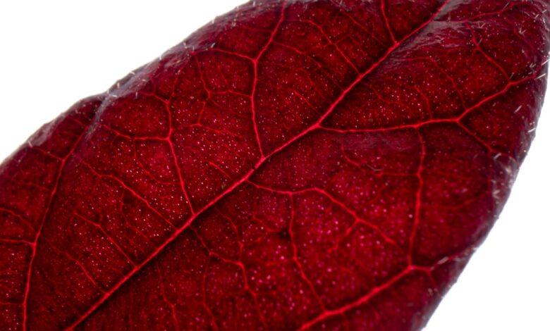 Kılcal damarlar adeta bir dantela | Zekeriya Çiçek 1