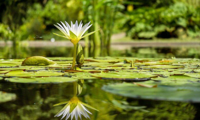 Bitkiler şuursuz ama...| Zekeriya Çiçek 1