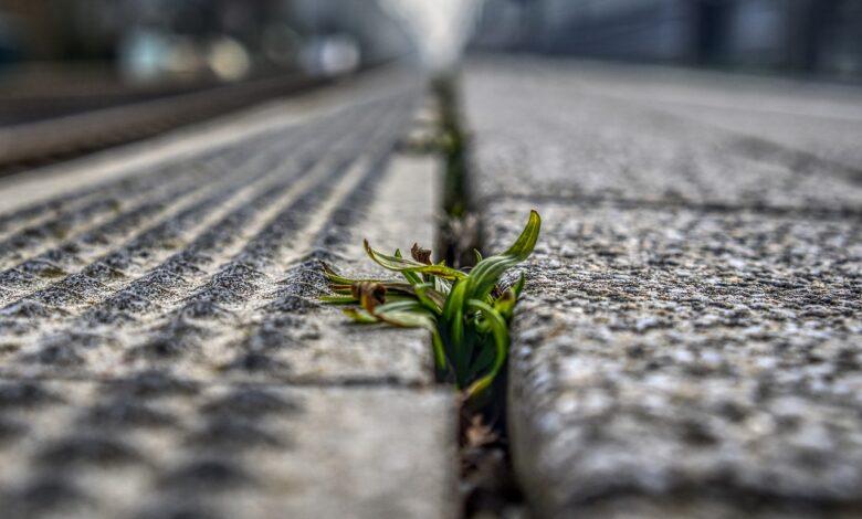 Cezaevi avlusunda bir tutam yeşil ot | Cemil Demir 1
