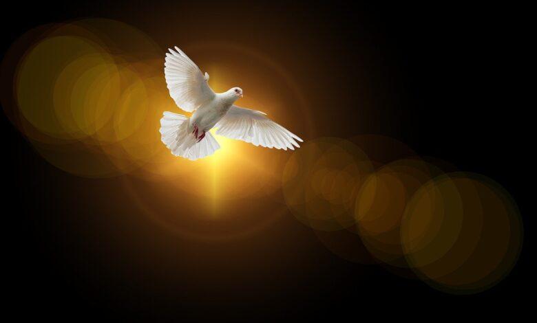Fetanet Açısından Efendimiz'in Vasıfları: Kerem ve Tevazuu 1