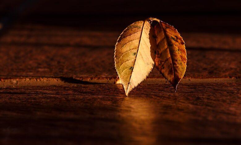 Ömür takviminden bir yaprak | Mehmet Ali Şengül 1
