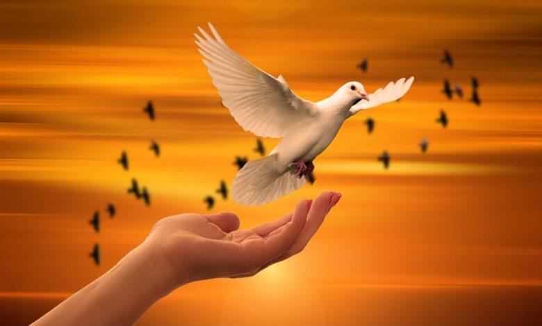 Teşekkür ve minnettarlık etmeye bedel, Dua ve Tebrik etme | Prof. Dr. Osman Şahin 1