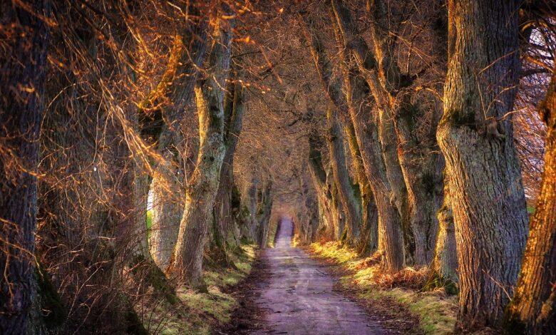 Yaratılışta dört yol | Abdullah Aymaz 1