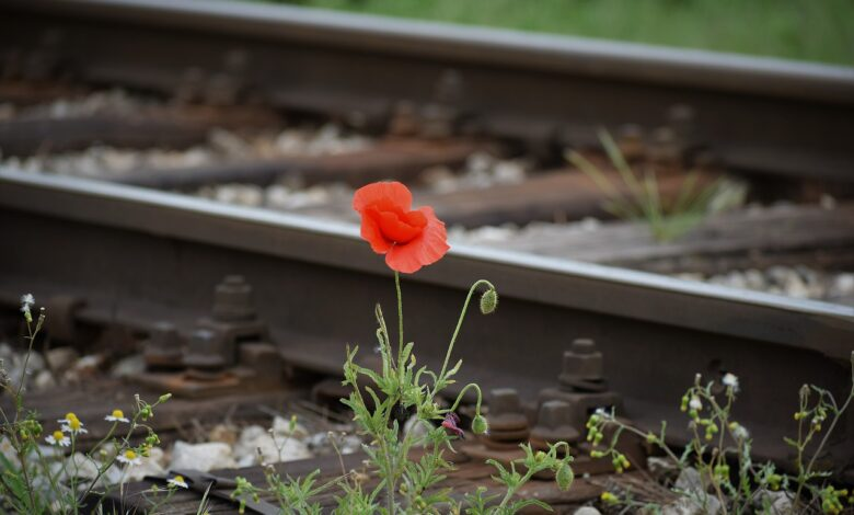 Tevazu, hacâlet, şefkat ve sahavet | Safvet Senih 1
