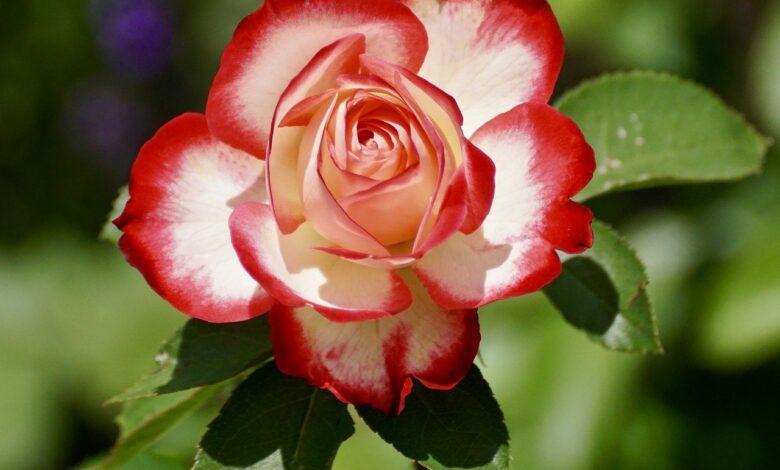 Güzellikten Aşka 1