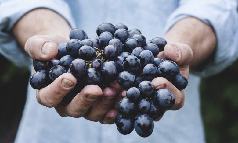 Ders baklavası bir üzüm tanesi bile... | Safvet Senih 1
