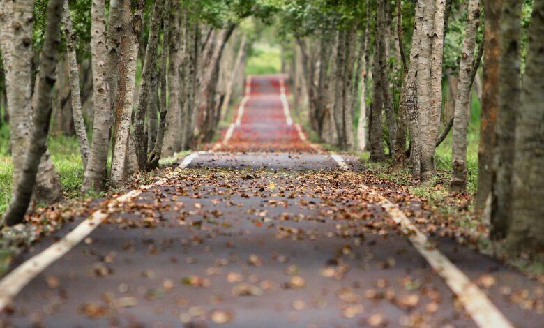 İslâmi(!) söylemden hıyânete giden yol! | Prof.Dr.Muhittin Akgül 1