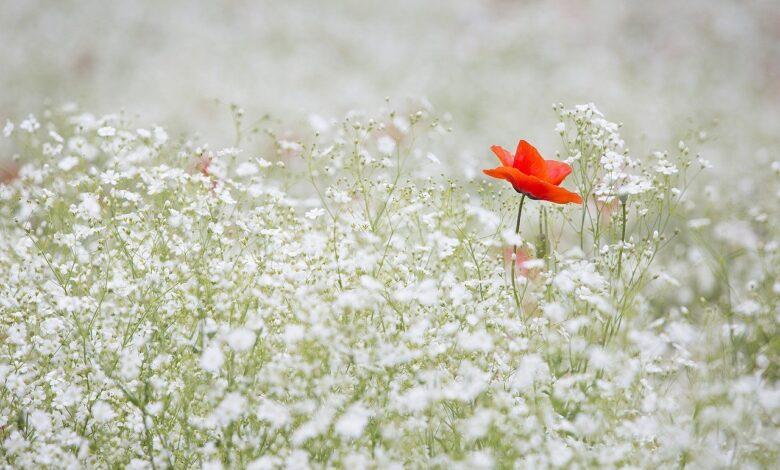 Merhaba kırgın çiçek   Gökhan Bozkuş 1
