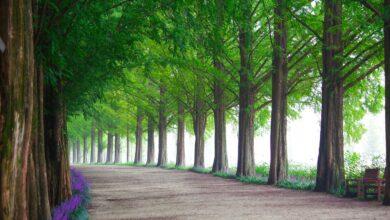 Öldükten sonra dirilme | Abdullah Aymaz 20