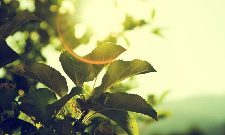 İdealleri ile asr-ı saadet gençleri (1) | Yücel Men 1