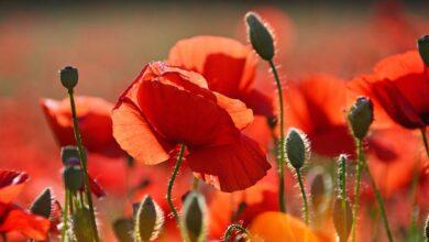 Kırmızı Temmuz | Sümeyra Emektar 6