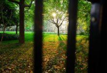 Demir parmaklıklar gerildi önlerine | İsmet Macit 14