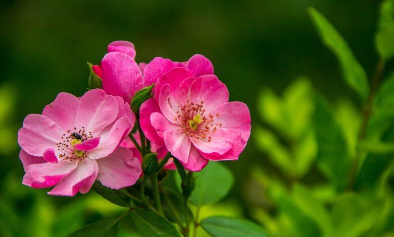Otuz Üçüncü Söz Üzerine 2   Zekeriya Çiçek 1