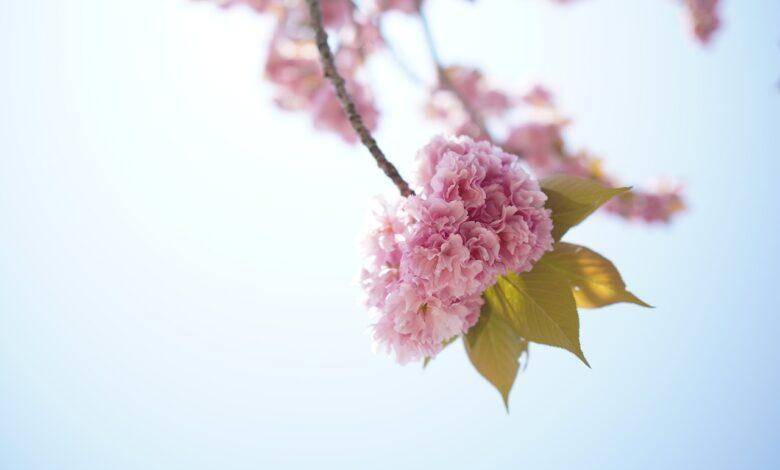 Sonsuz şefkate rağmen ebedi cehennem azabı nasıl olur? 1