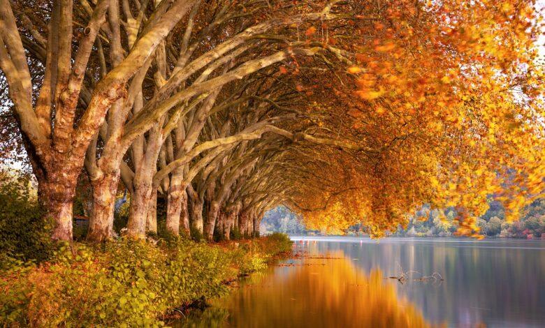 Saksıya Çınar Ağacı dikilmez | Abdullah Aymaz 1