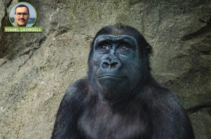 20. Yazı: Kur'ân'da hayvan türlerinin yaratılışıyla ilgili bilgi var mıdır? | Dr. Yüksel Çayıroğlu 1