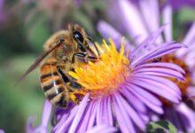 Bir bal arı ailesinin hayat serüveni | A.Râsim Emiroğlu 14