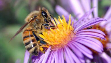 Bir bal arı ailesinin hayat serüveni | A.Râsim Emiroğlu 18