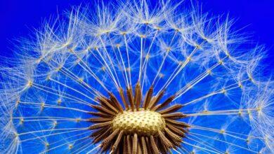 Peygamber, üstad ve mürşide minnet nasıl anlaşılmalıdır? 2   Prof. Dr. Osman Şahin 1